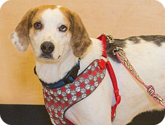 Hound (Unknown Type) Mix Dog for adoption in Elmwood Park, New Jersey - Toby