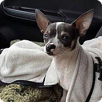 Adopt A Pet :: Ricky - Staunton, VA