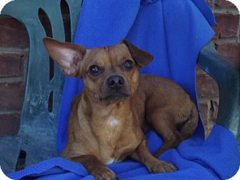 Dachshund/Terrier (Unknown Type, Small) Mix Dog for adoption in Marshall, Texas - Chloe