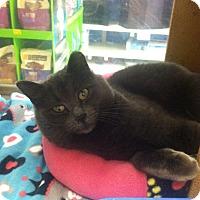 Adopt A Pet :: Blake - Byron Center, MI