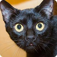 Adopt A Pet :: Ebony - Irvine, CA