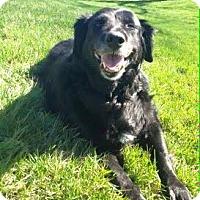 Adopt A Pet :: Margo - Bridgewater, NJ