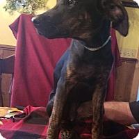 Adopt A Pet :: Brady - Charlestown, RI