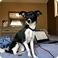 Adopt A Pet :: Jasmine - Fort Collins, CO