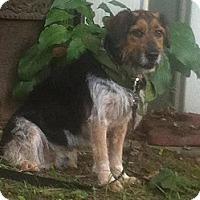 Adopt A Pet :: Kenny - Toronto, ON