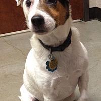 Adopt A Pet :: Dash in Austin, TX - Austin, TX
