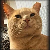 Adopt A Pet :: Biff - Knoxville, TN
