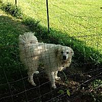 Adopt A Pet :: Axleander - in MA - Lee, MA