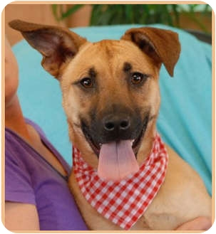 German Shepherd Dog Mix Puppy for adoption in Las Vegas, Nevada - Minnie Pearl