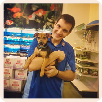 Chihuahua/Miniature Pinscher Mix Puppy for adoption in Miami, Florida - Jack