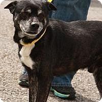Adopt A Pet :: Nanu ($300) - Ocala, FL