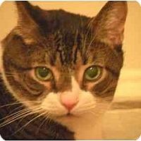 Adopt A Pet :: Chunky - Howell, NJ
