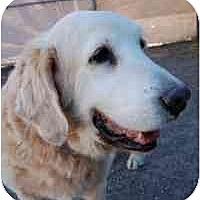 Adopt A Pet :: Waldo - Scottsdale, AZ
