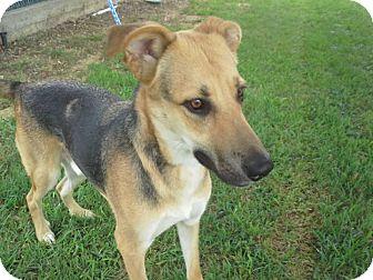 German Shepherd Dog Mix Dog for adoption in Dallas, Texas - Zeus