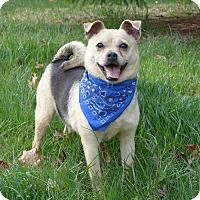 Adopt A Pet :: Ally - Mocksville, NC