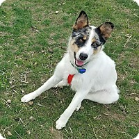 Adopt A Pet :: Jax- adoption pending - Greeley, CO