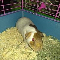 Adopt A Pet :: Elsa - Lancaster, CA