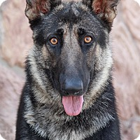 Adopt A Pet :: Harmony von Hemau - Los Angeles, CA