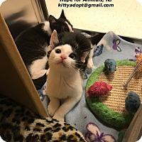Adopt A Pet :: Trixie - Marlboro, NJ