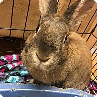 Adopt A Pet :: Harvey - Edinburg, PA