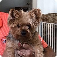 Adopt A Pet :: Molly - Albuquerque, NM