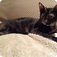 Adopt A Pet :: Yoko - Beaufort, SC