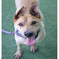 Adopt A Pet :: WALLY - Los Angeles, CA