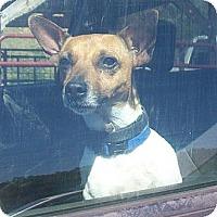 Adopt A Pet :: Weston - Harrisburgh, PA