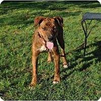 Adopt A Pet :: Kate - Douglasville, GA