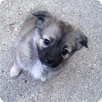 Adopt A Pet :: Sadie - Brant, ON