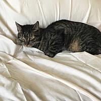 Adopt A Pet :: Oliver - Monrovia, CA