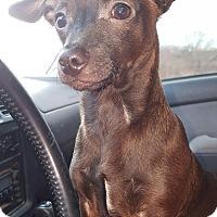 Adopt A Pet :: Leroy Jackson - London, KY