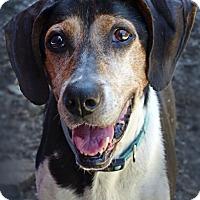 Adopt A Pet :: Reba--RESCUED! - Marlinton, WV