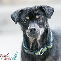 Adopt A Pet :: Einstein - Roanoke, VA