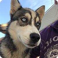Adopt A Pet :: Latecia - Frederick, MD