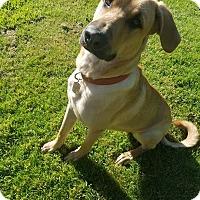 Adopt A Pet :: Axel - Salem, OR