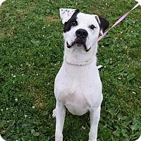 Adopt A Pet :: Pongo - Steger, IL