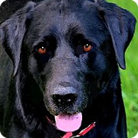 Adopt A Pet :: COLBY(WHAT A STORY-PLS READ! - Wakefield, RI