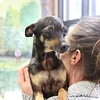 Adopt A Pet :: Dot - Greensboro, NC