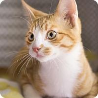 Adopt A Pet :: Belamy - Montclair, CA