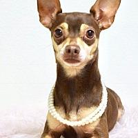 Adopt A Pet :: Wilma - Dublin, CA
