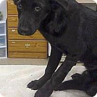 Adopt A Pet :: Patty - Cumming, GA
