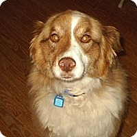 Adopt A Pet :: Mollie - cedar grove, IN