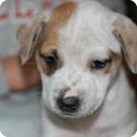 Adopt A Pet :: Sweet Sassy - Marlton, NJ