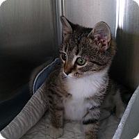 Adopt A Pet :: Sierra - Armuchee, GA