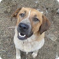 Adopt A Pet :: Kirby - Northumberland, ON