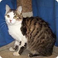 Adopt A Pet :: Jonah - Colorado Springs, CO