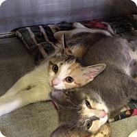 Adopt A Pet :: Dora the Explorer - Byron Center, MI