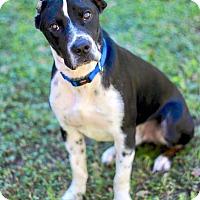 Adopt A Pet :: Flynn - San Antonio, TX