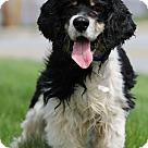 Adopt A Pet :: Jose